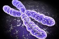 x-hromosoma
