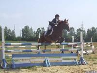 В Марий Эл пройдут соревнования по конному спорту