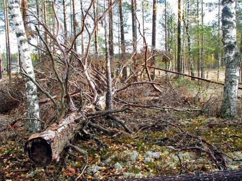 deljankanaozerecinglok20091.10.031