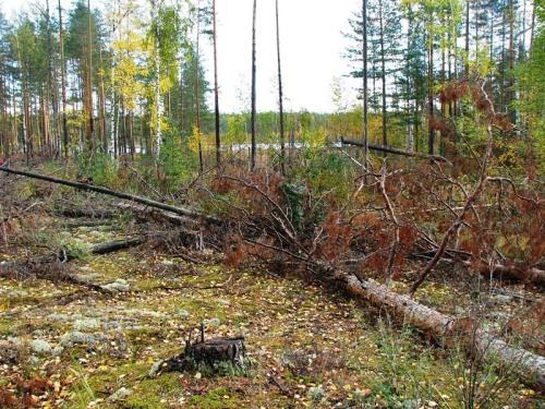 deljankanaozerecinglok20091.10.036