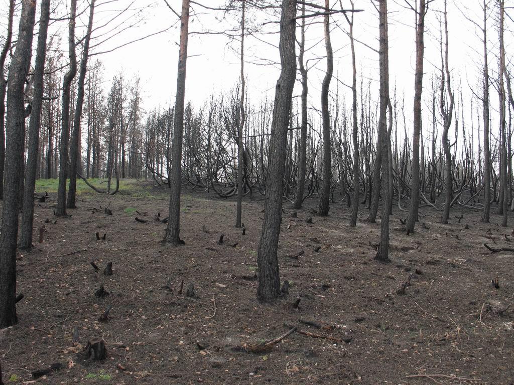 На восстановление сгоревших лесов в ХМАО потребуется 5 лет