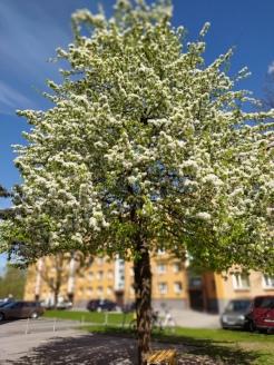 Tartu_shosho_08-05-2020_05