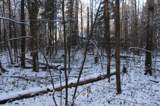 Lesa_okolo_milic_dachi_01