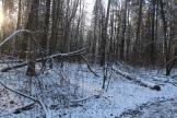 Lesa_okolo_milic_dachi_02