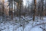Lesa_okolo_milic_dachi_03