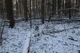 Lesa_okolo_milic_dachi_04