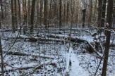 Lesa_okolo_milic_dachi_05