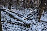 Lesa_okolo_milic_dachi_06