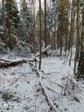 1 фо__Звенигов. леснич. 175, 175, 176 кв._15 нояб 2020.