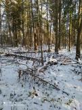 1 фот_Звенигов. лес. Нурда. 73,74 кв._15 нояб 2020.