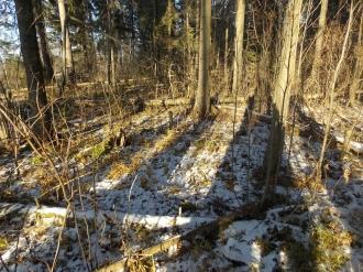 1 фото3_Сернур лесхоз.15 нояб 2020.