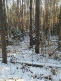 1 фото_Звенигов. лес. Керемлак. 79,80,81 кв.15 нояб 2020.