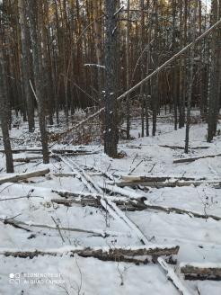 1 фото_Медведево. Куяр лесхоз. 28, 114 кв.17 нояб 2020.