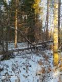 1 фото_Морко. лес. Кужер. 55, 56 кв.15 нояб 2020.