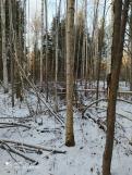 10 фото_Морко. лес. Кужер. 55, 56 кв.15 нояб 2020.