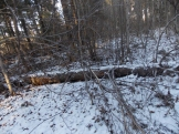 2 фото3_Сернур лесхоз.15 нояб 2020.