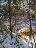 2 фото_Звенигов. лес. Керемлак. 79,80,81 кв.15 нояб 2020.