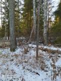2 фото_Морко. лес. Кужер. 55, 56 кв.15 нояб 2020.