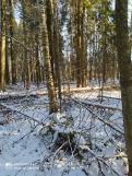 3 фот_Звенигов. лес. Нурда. 73,74 кв._15 нояб 2020.