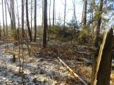 3 фото3_Сернур лесхоз.15 нояб 2020.