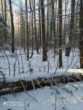 3 фото_Звенигов. лес. Керемлак. 79,80,81 кв.15 нояб 2020.