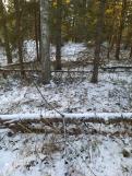 3 фото_Морко. лес. Кужер. 55, 56 кв.15 нояб 2020.