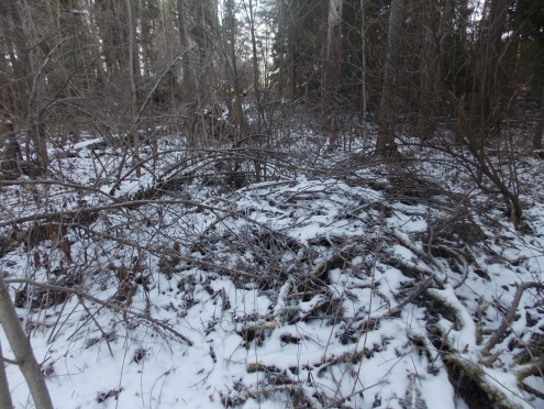 4 фото3_Сернур лесхоз.15 нояб 2020.