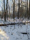 4 фото_Звенигов. лес. Керемлак. 79,80,81 кв.15 нояб 2020.