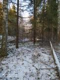 4 фото_Морко. лес. Кужер. 55, 56 кв.15 нояб 2020.
