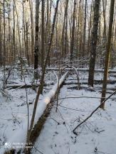 5 фото_Звенигов. лес. Керемлак. 79,80,81 кв.15 нояб 2020.