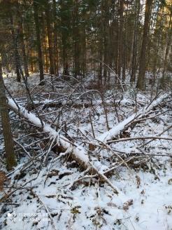 5 фото_Морко. лес. Кужер. 55, 56 кв.15 нояб 2020.