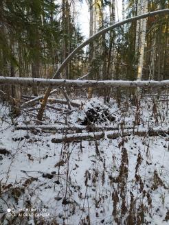 6 фото_Морко. лес. Кужер. 55, 56 кв.15 нояб 2020.