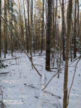 7 фото_Звенигов. лес. Керемлак. 79,80,81 кв.15 нояб 2020.