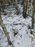 7 фото_Морко. лес. Кужер. 55, 56 кв.15 нояб 2020.