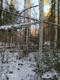 8 фото_Морко. лес. Кужер. 55, 56 кв.15 нояб 2020.
