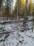 9 фото_Морко. лес. Кужер. 55, 56 кв.15 нояб 2020.